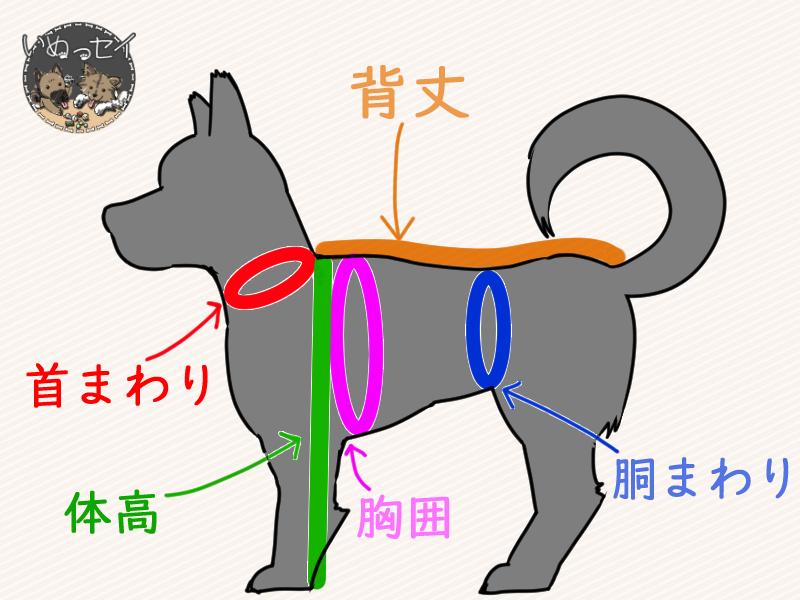犬のサイズを表す図